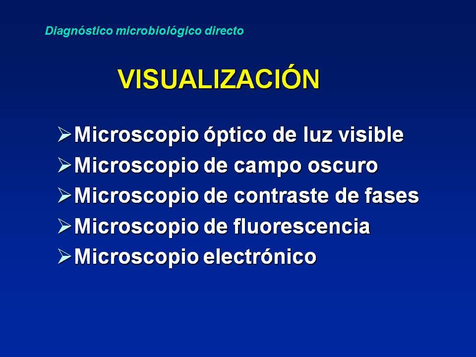 746b5ec01 El microscopio óptico es el más utilizado en los laboratorios de  microbiología de forma rutinaria. También pueden emplearse el de campo  oscuro